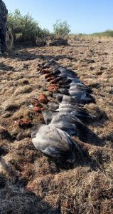 Duck hunts in Port Aransas Texas duck hunts